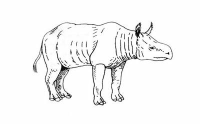 Rhinocerotidae fosil Teletaceras