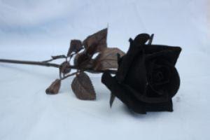 Koleksi gambar bunga mawar hitam