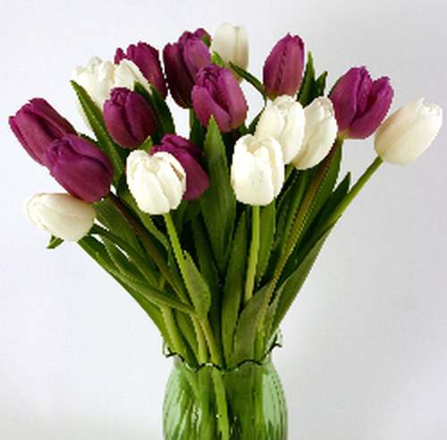 purple and white tulips jpgPurple And White Tulips