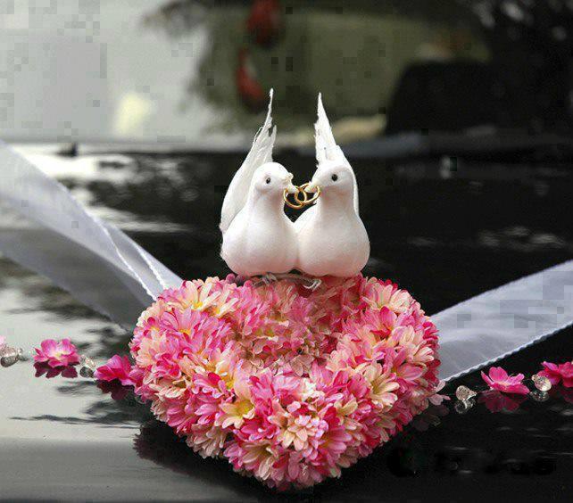 Lindas palomas de amor - imagen