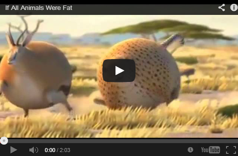 If Animals were all Fat - Trending Video ~ The Viral Online