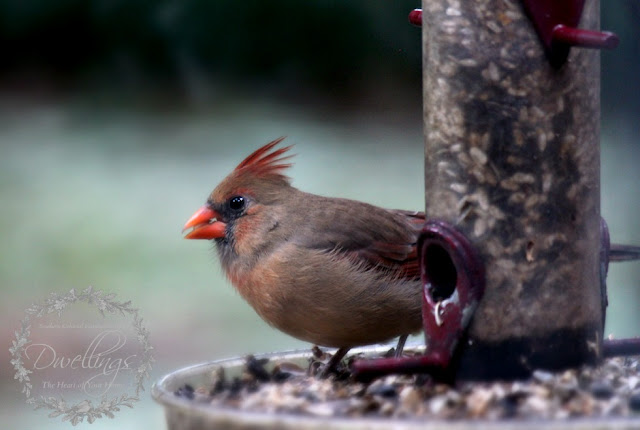 A pair of cardinals visiting the bird feeder on a chilly fall day.