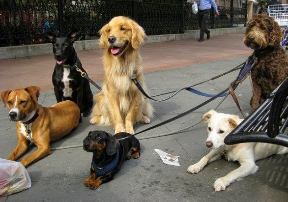 Passeggia con noi e con il tuo amico a 4 zampe