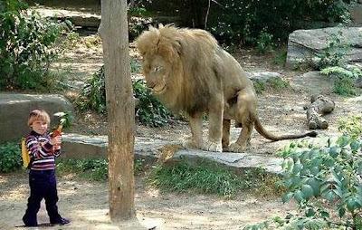 dimakan-singa