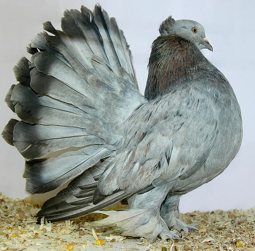 pigeon hindu personals Meet thousands of single hindus with mingle2's free hindu personal ads and  chat rooms our network of hindu men and women is the perfect place to make  hindu friends or find a hindu boyfriend or  hihay bird's lets make something  hi.