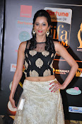 Actress Radhika at IIFA Utsavam day 2-thumbnail-12