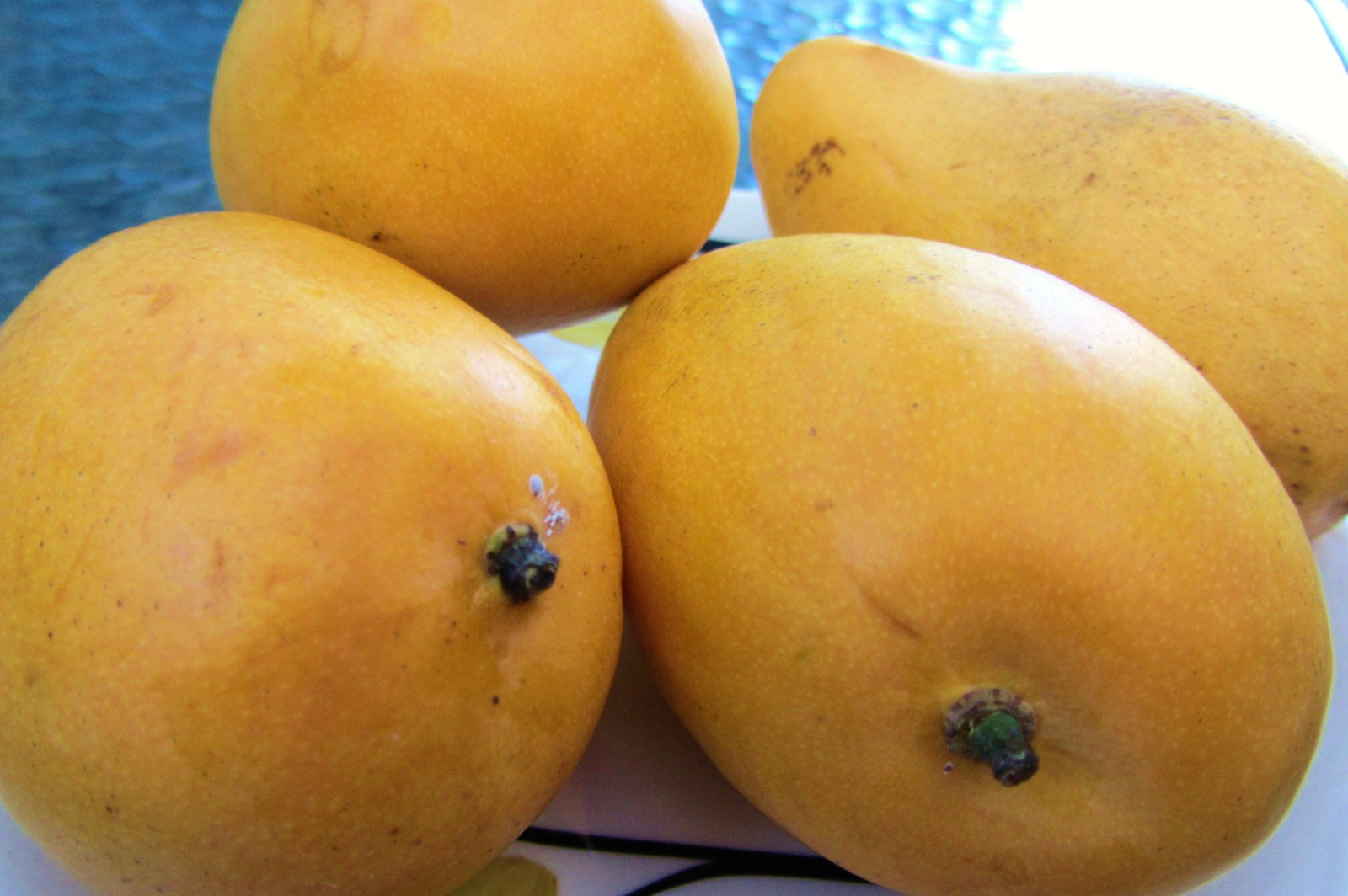 Lets eatmple sweet sticky rice and mango mexican mangoes usually use in making salsa chutneys or relishes and they are available all year round in the us the acceptable kind of mango i can ccuart Image collections