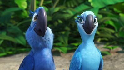 Blue macaws in rio - photo#19