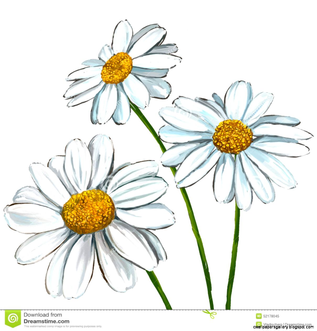 Daisy Hand Drawn Clipart   Clipart Kid