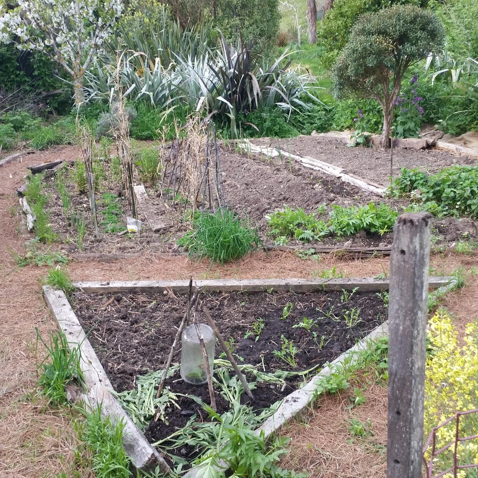 Soil Beneath My Fingers: Haydens New Home: 33 Hereweka