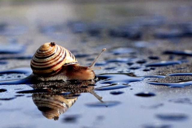 Snail in water