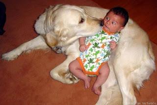 wajah lucu bayi