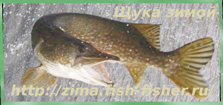 Зимняя рыбалка. Ловля щуки на блесну