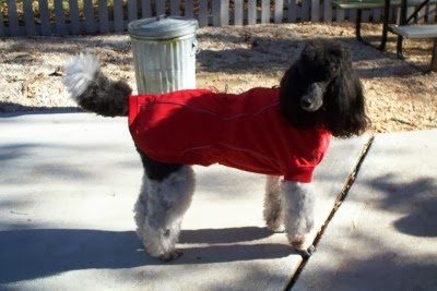 Poodle Blogger The Parti Crew Reviews Winter Coats For