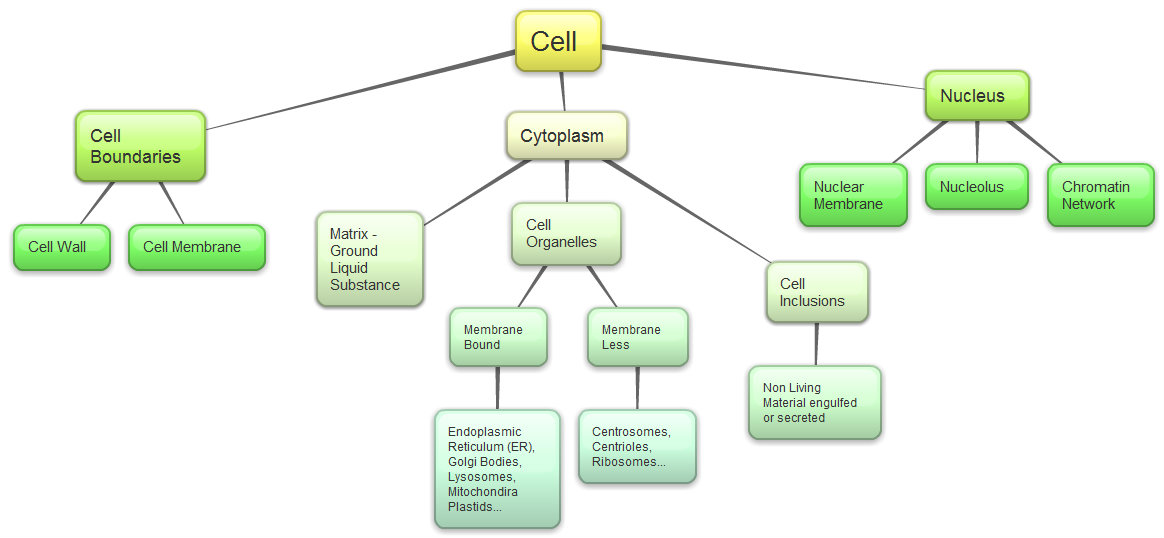 Biology Concept Map Cell Structures Pictures To Pin On