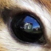 Chipmunk eye
