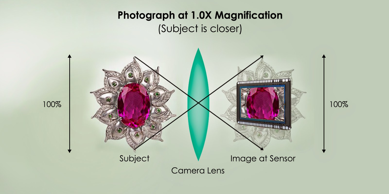 Photograph at 1.0x magnification