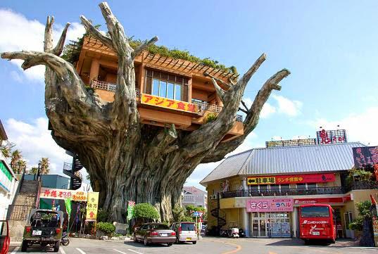 café japonais dans l'arbre