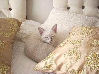 fotos+de+gattitos+gratis