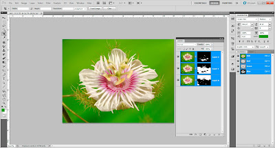 Focus Stacking in Adobe Photoshop