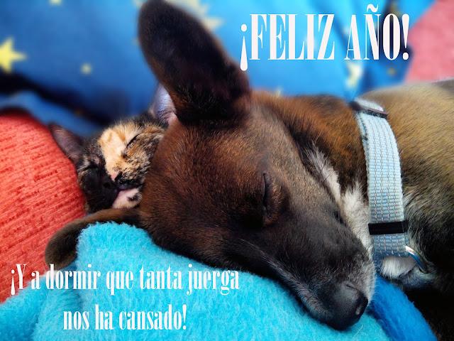 ¡Las mascotas os desean Feliz Año!