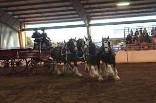 Clydesdale, Clydesdale Hitch, Clydesdale Mares, Clydesdale Breeders, CBUSA, Clydesdale for Sale, Clydesdale Stallion