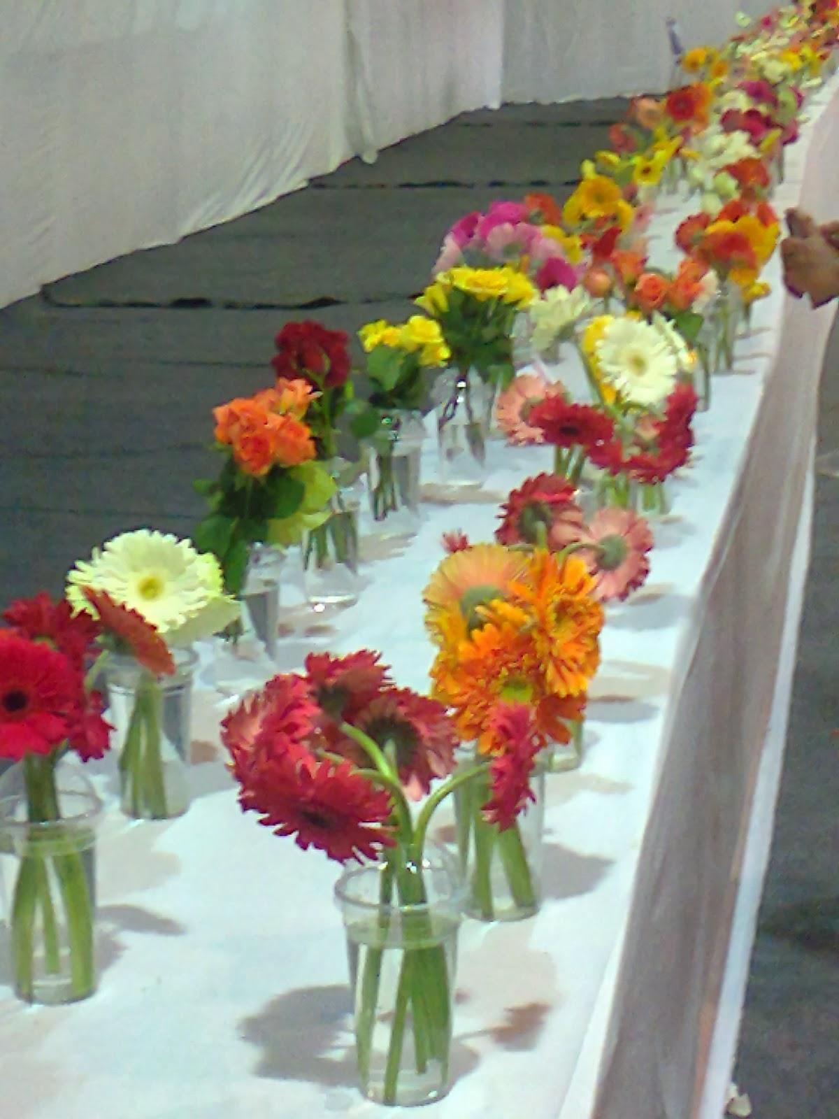 garbera cut flower varieties
