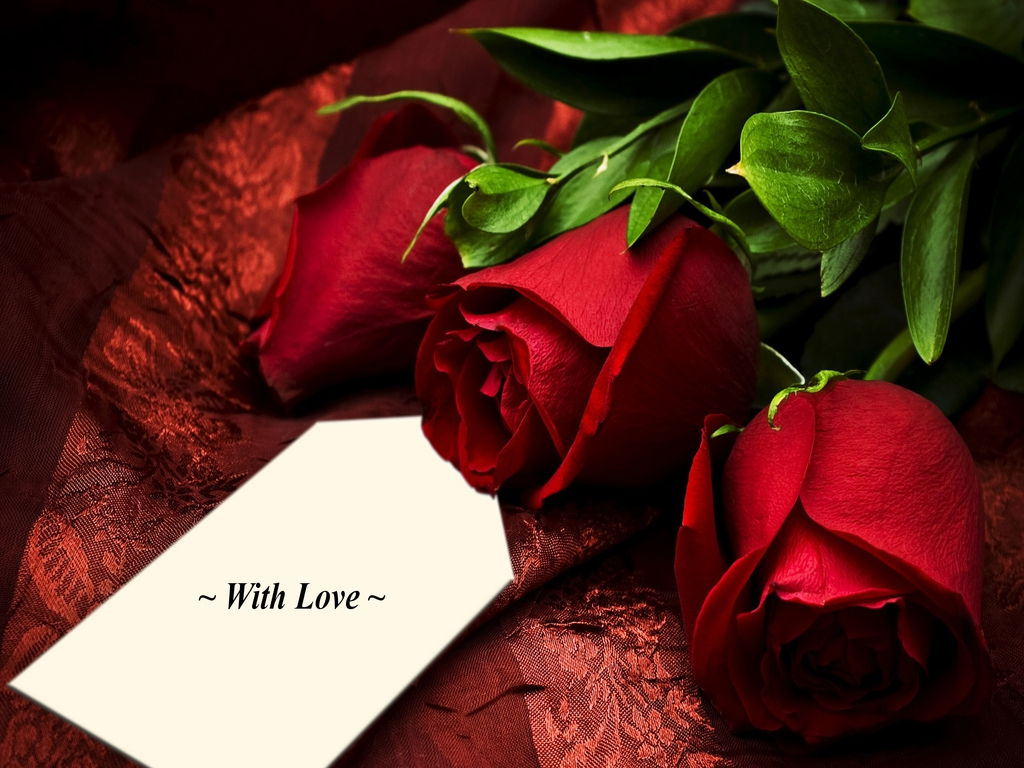 90 wedding red rose flower wallpapers love roses pictures