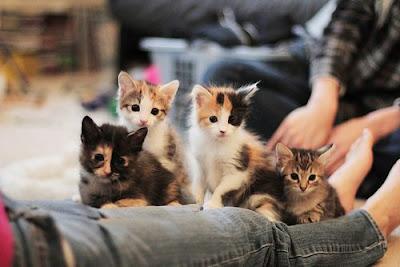 kucing comel cats cute