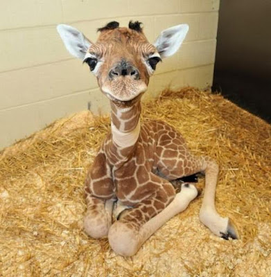 I'm A Baby Giraffe Sent Here To Make Your Day Better