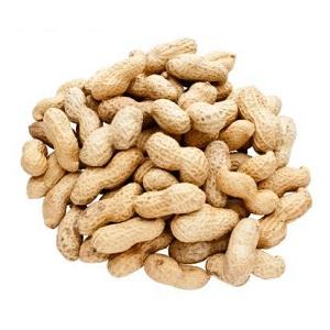 contoh artikel bahasa sunda tentang kesehatan kacang