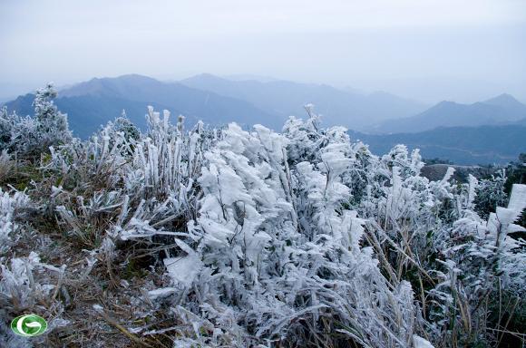 Tuyết phủ tại Sapa - Những địa điểm có tuyết tuyệt đẹp ở miền Bắc