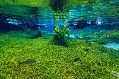águas cristalinas da Nascente Azul em Bonito, MS