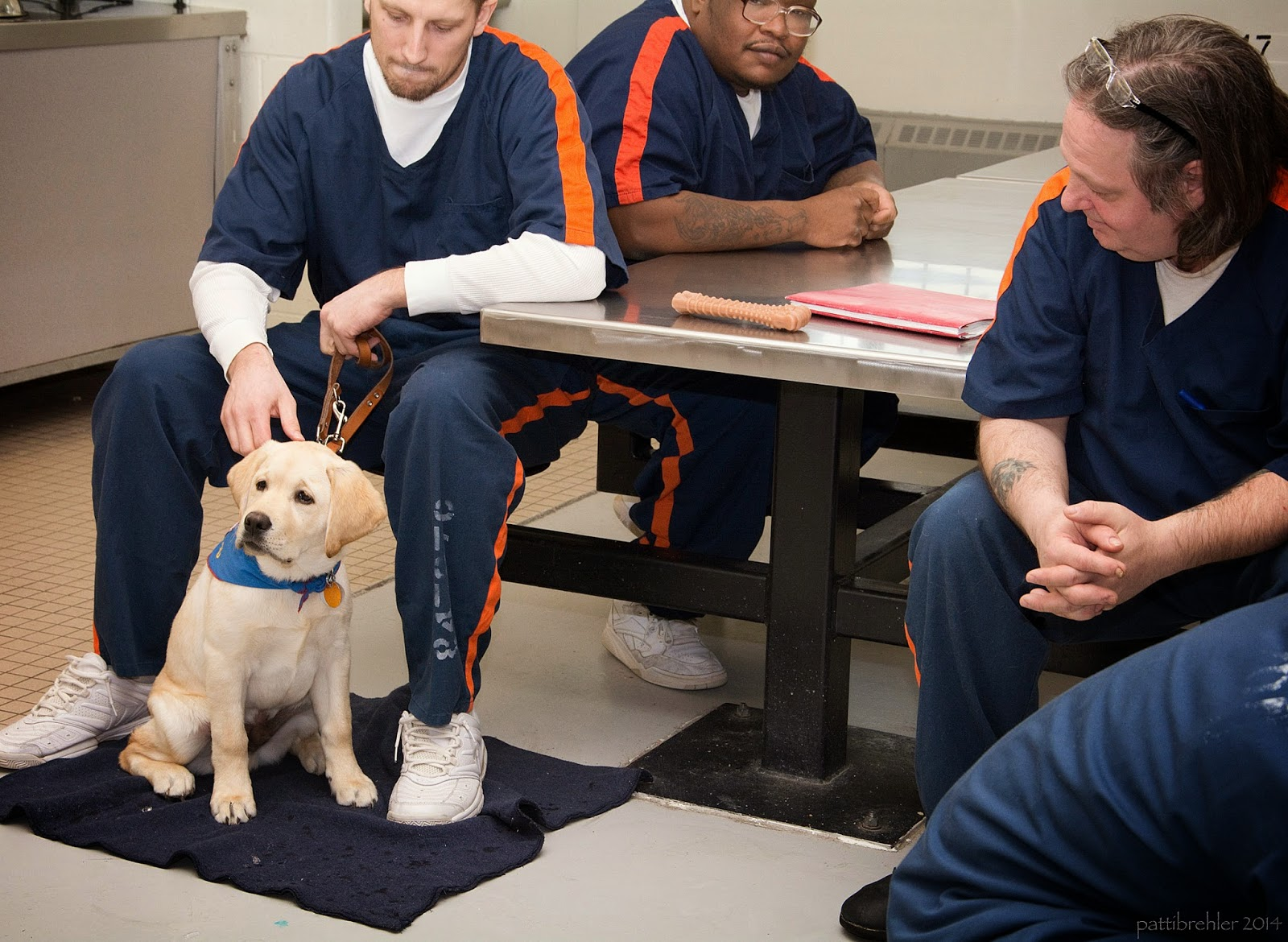 "A yellow lab puppy is sitting on a grey ""mat"" between the feet of a man who is sitting on a lunchroom stool. The man is holding the puppy's leash in his left hand and his left forearm is resting on the metal table top. The man's right hand is reaching down to pet the pup's head. The puppy is wearing a blue bandana. The man is looking down at the pup. Behind the man is an african american man sitting at the table. He is wearing glasses and has his forearms resting on the table. On the right side of the picture is a third man who is sitting facing out from the end of the table, his forearms are resting on his thighs and he is looking over at thepuppy. He has a pair of glasses on the top of his head. There is a dog nylabone and a red folder on the talbe. The men are wearing the blue prison uniforms."