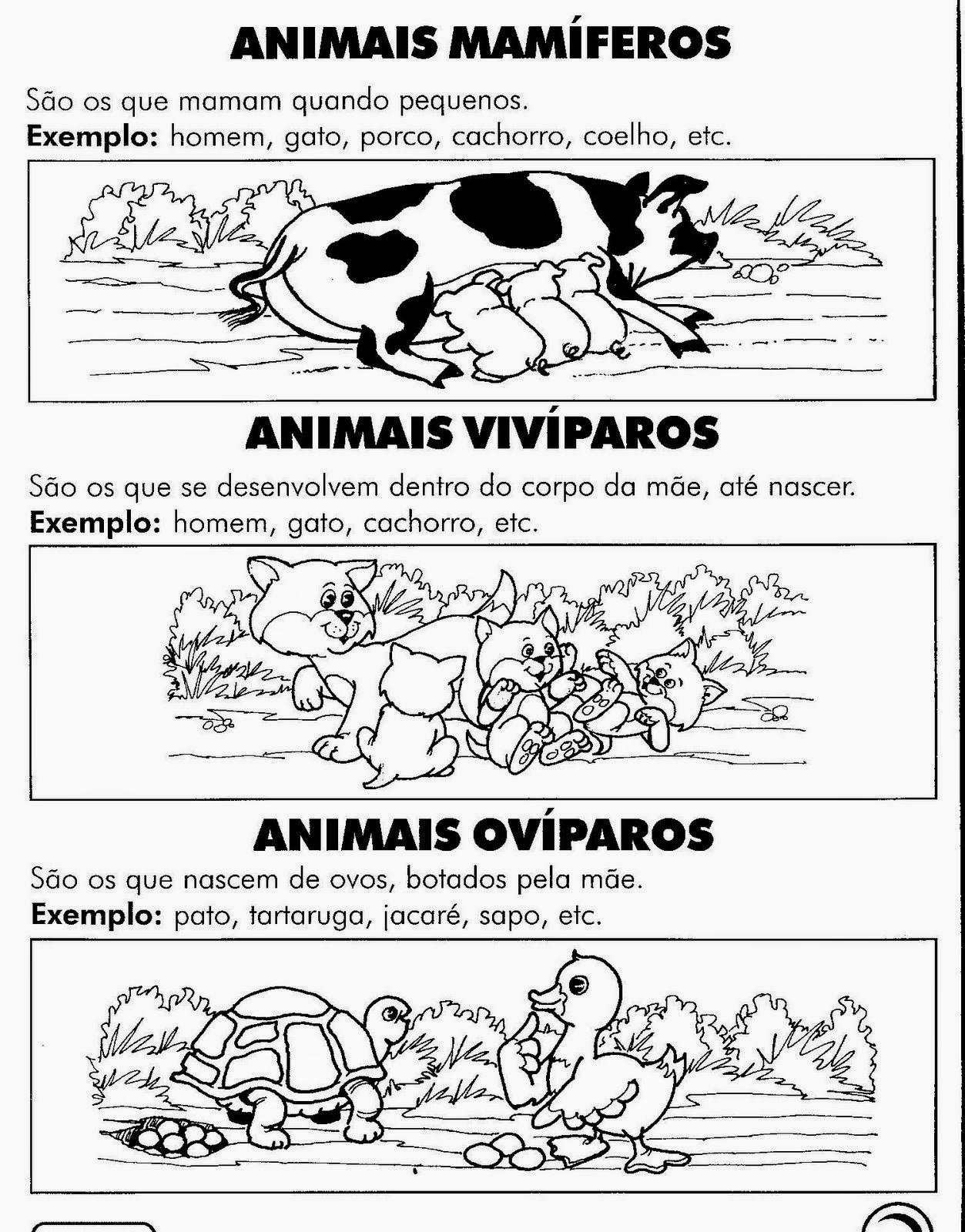 Atividades ciências 2 ano animais