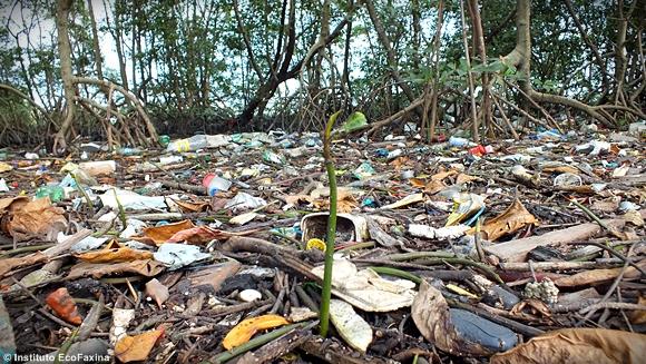 No manguezal o plástico forma camadas no solo em meio a folhas, galhos e propágulos.