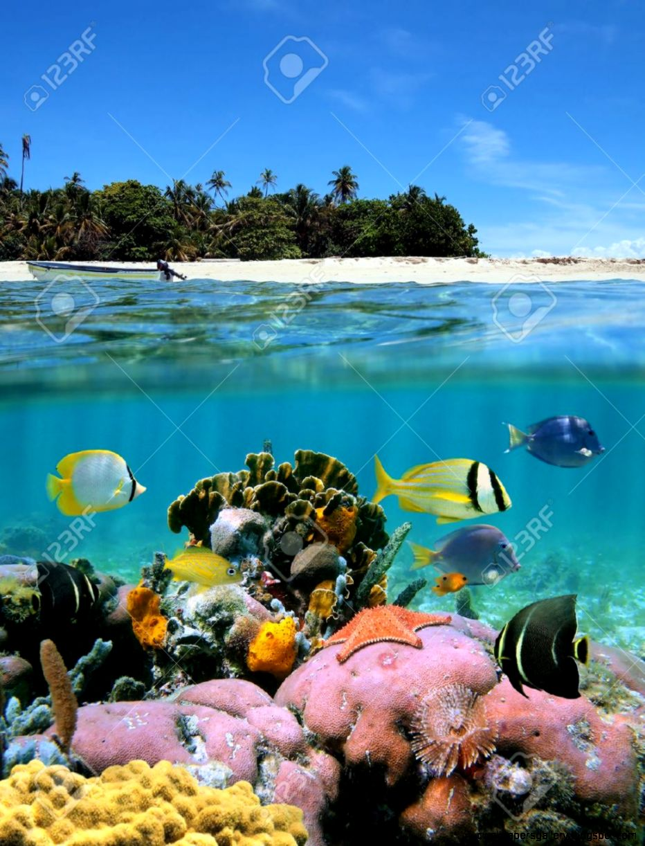 Underwater And Surface View With An Unspoilt Beach And A C