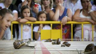 Manchita, el caracol más rápido de Tricio