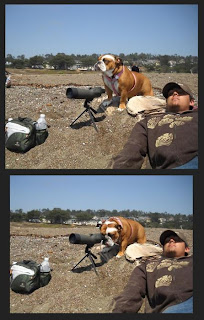 dog looking trough binoculars