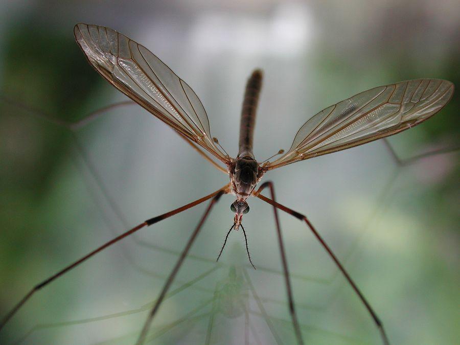 Image Result For Bug Off Exterminators