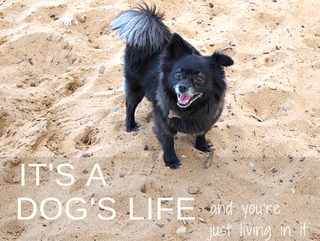 Dog, Pet, A dog's life