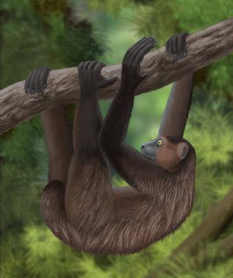 mamiferos extintos de africa Babakotia