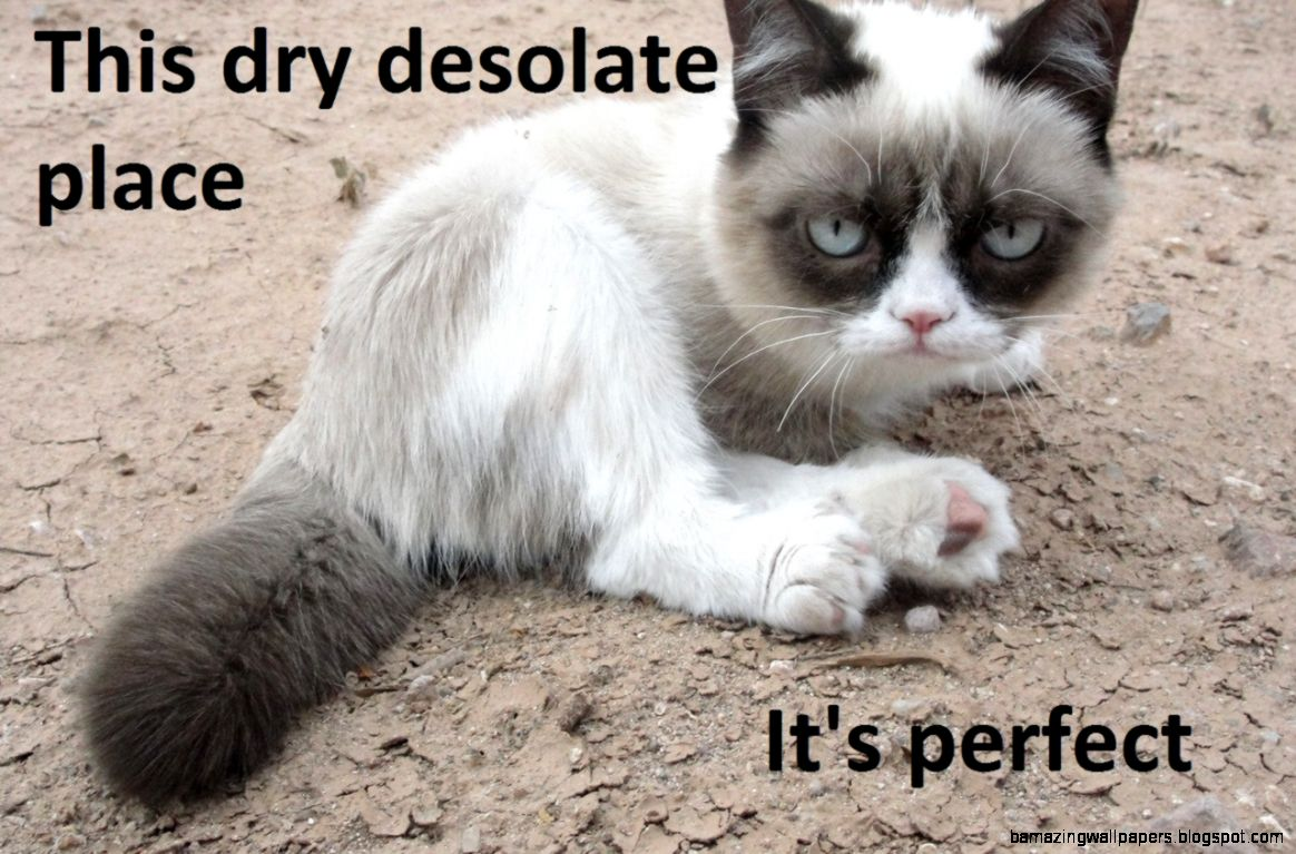The 50 Funniest Grumpy Cat Memes  Complex