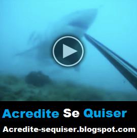 Vídeo Dramatico Mostra Mergulhador Lutando Pela Vida Contra Tubarão Enorme. Sera Que Ele Conseguiu?