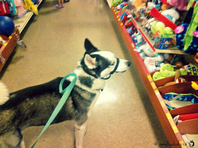 petsmart toy section