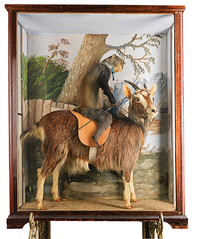 an introduction to the history of taxidermy Project category: collections stewardship american museum of natural history  american museum of natural history 1 introduction   taxidermy.