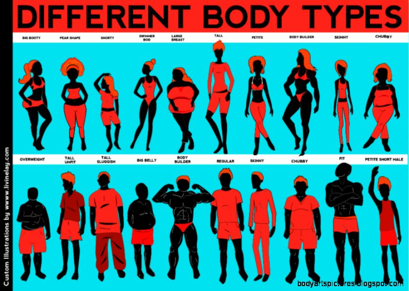 Custom Illustrations Vector Art – Body Types for Fitness Website