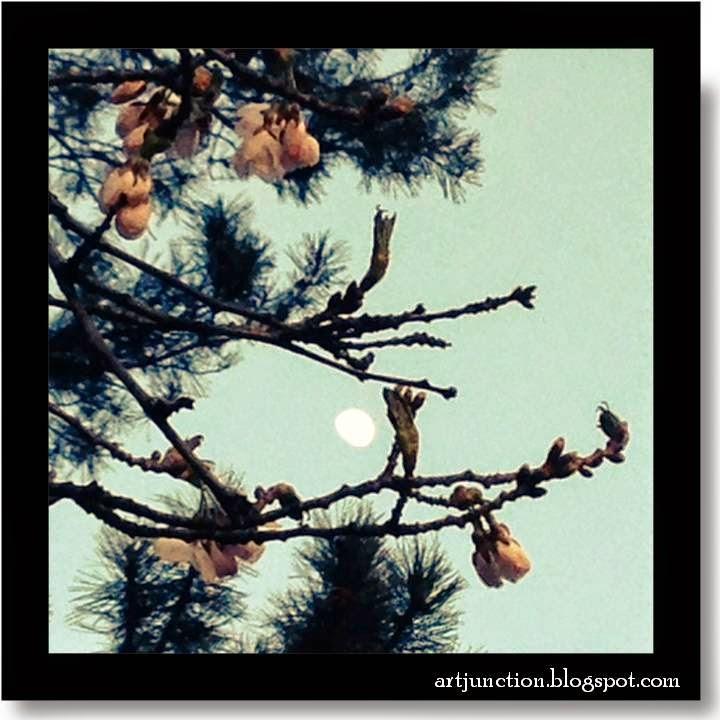 Cherry Blossoms - High Park, Toronto