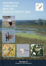 BEDDINGTON FARMLANDS BIRD AND WILDLIFE REPORT 2020
