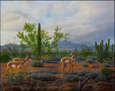 Sonoran pronghorn,endangered,desert wildlife,cactus,clouds,Organ Pipe Cactus National Monument,animal